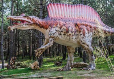 Museu dos Dinossauro...